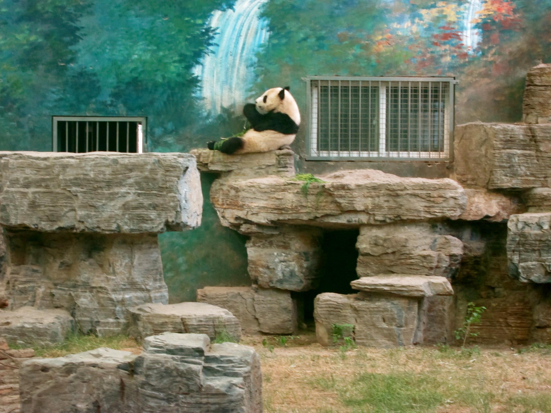 Panda House beijing zoo & the panda house - passport to wanderlust